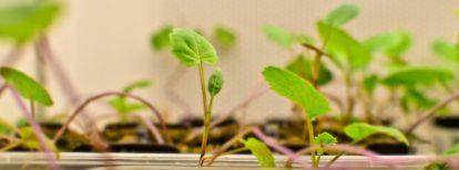 Nexgen Plants secures USDA approval