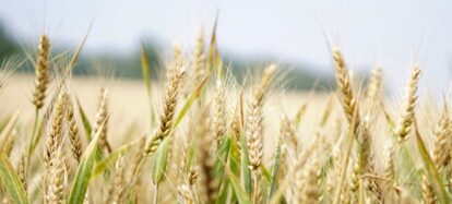Blue sky thinking: Challenging the rice industry for sustainable and long-term productivity