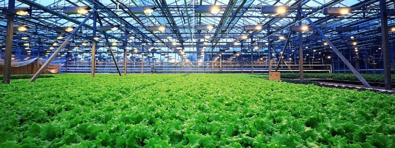 Innovation Standards in Agribusiness