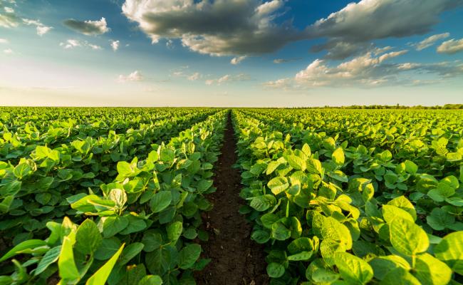 Agricultural Innovation